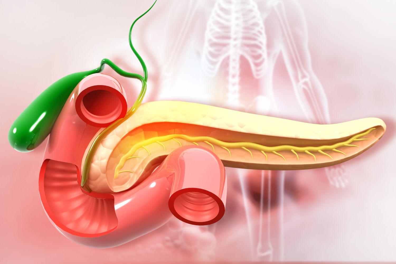 Pankreas - Bauchspeicheldrüse